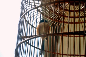 curve in bird cage