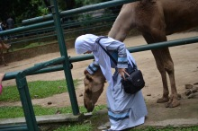 qst time touching camel
