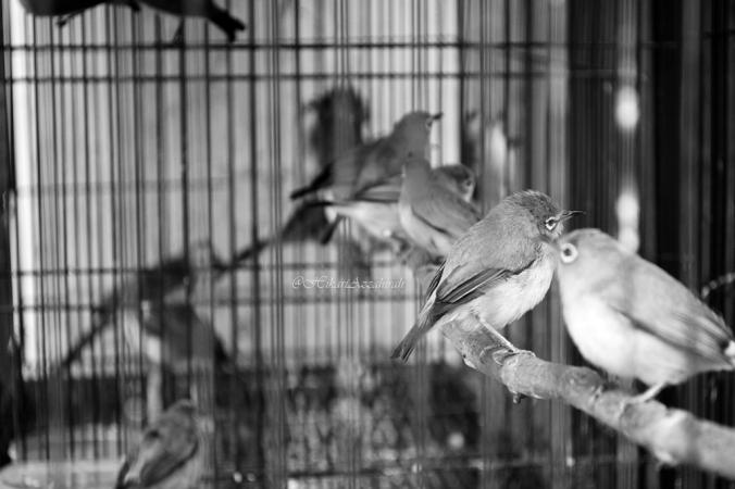 burung dalam sangkar