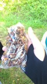 sebesar ini belalang goreng yg hargnya 5rb itu