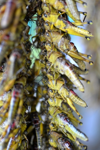 Belalang yang ditusuk dan masih hidup